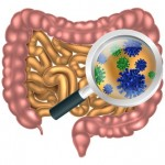 Magnifying Glass Gut Flora
